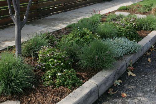 native parkway planting